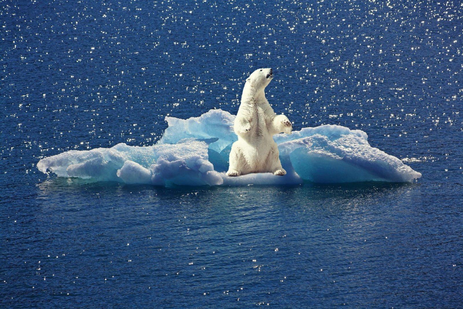 polar-bear-2199534_1920